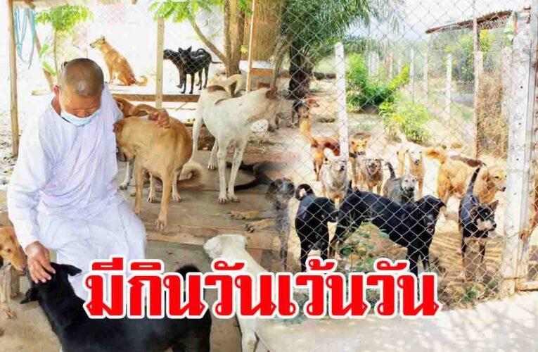 แม่ชีวอนผู้ใจบุญ ช่วยน้องหมาแมวร่วม 300 ชีวิต กำลังจะอดตาย